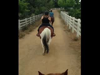 Willow Creek Stables: Trail ride!