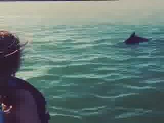 Port Isabel, Teksas: Dolphin fun