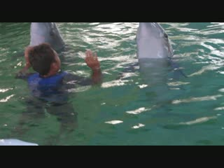 Bali Island Adventure Tours: Swimming with Dolphin