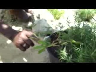 Sandy's By The Sea: Dillo demonstrates Sleeping Plant
