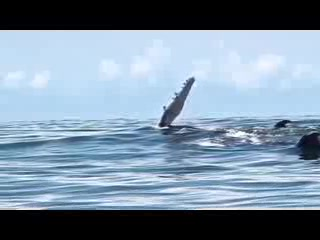 Shelter from the Storm : Whale Watching in Uvita