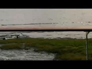 Esplanade Boardwalk : ペリカンが飛び立つ姿
