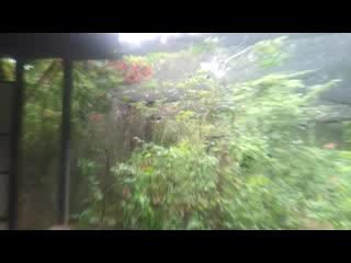 Granada, Nicaragua: Butterflies galore!