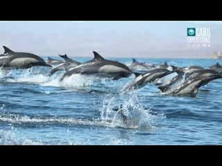 Cabo Expeditions Official Video - Cabo San Lucas, Mexico (2012)