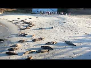 La Jolla Cove: Seal Cove