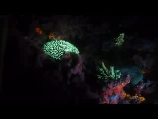Senggigi, Indonesia: FLUO DIVE WITH DSM DIVE
