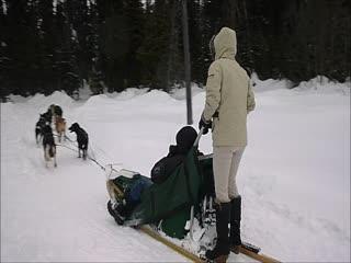 Sun Peaks, Kanada: mushing the dog sled