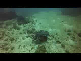 Diving around Isla Tortuga