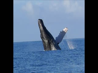 Pacific Whale Foundation: Maui Whale Watch