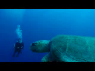 Amazing dive with a turtle