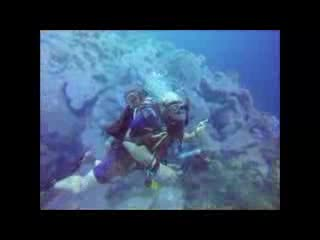 Bonaire East Coast Diving照片