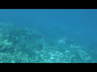 Bonaire East Coast Diving: Eagle Rays