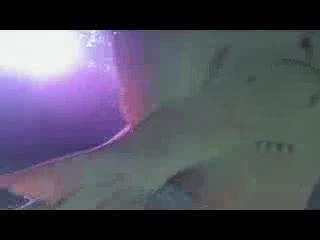 Sea Life Blackpool : Snorkelling With Sharks