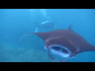Nusa Lembongan, Indonesia: manta point