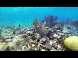 Robert's Grove Beach Resort: Padi 5 Star Diving with Robert's Grove Belize