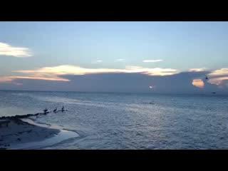 Hatchet Caye Resort: Hatchet Caye Belize Sunsets and sea birds