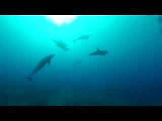 Hatchet Caye Resort: Swim with Dolphins in Belize with Hatchet Caye!