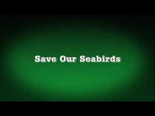 Save Our Seabirds on Animal Outtakes with Marsha Panuce