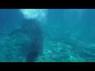 Vilamendhoo Island Resort & Spa: Chasing Manta