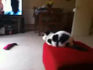 Warfield, UK: Cat