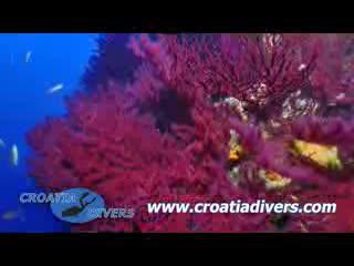 Croatia Divers Vela Luka: Croatia Divers