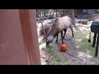 River Spruce: Trick or Treat