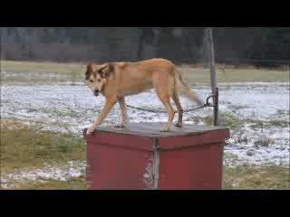 Mahoosuc Inn: Dog Sled Tours with Mahoosuc Outdoors