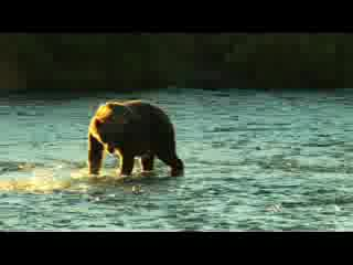 Kodiak Brown Bear Center Promotional Video