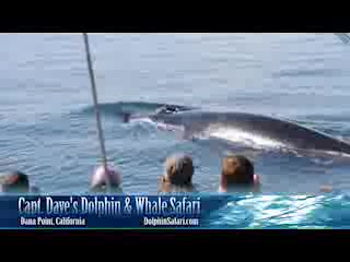 Dana Point, CA: Capt. Dave's Dolphin and Whale Watching Safari