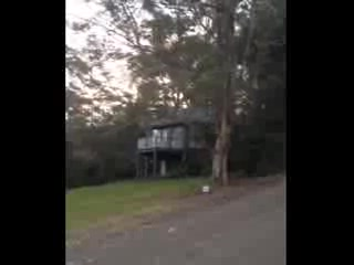Bluegums Cabins: View and sounds from The Nests