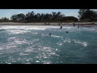 Jupiter, Floryda: Diving for Fish at DuBois