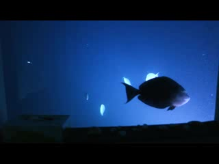 The Manta Resort: Great views from the inside of the Underwaterroom by night!!!