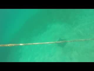 Κόλπος Simpson (Λιμνοθάλασσα), Άγιος Μαρτίνος: Spotted Eagle Ray Tintamarre Island St Maarten St Martin