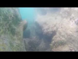 Hamilton, Bermudy: Angelfish in abundance