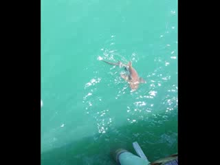 Flagler Beach Municipal Pier: Shark on the line!