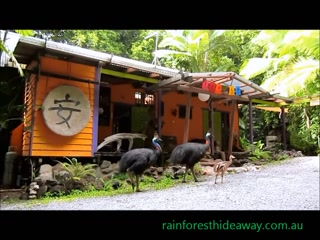 A quick look at room 1075 at Rainforest Hideaway