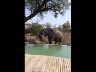 andBeyond Ngala Tented Camp: A Lunchtime Visitor