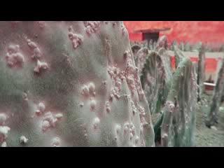 Oaxaca, México: Cochineal exhibit at MACO