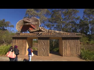 The Australian Reptile Park is the best family FUN day out! Exciting wildlife shows, loads of animal interaction and great customer service is what we are famous for!