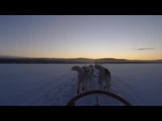 Nellim Wilderness Hotel : Husky ride