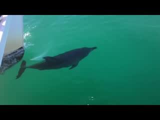 Huskisson, Austrália: The Dolphins of Jervis Bay