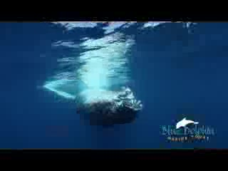 Blue Dolphin Marine Tours: Blue Dolphin Whale Watching