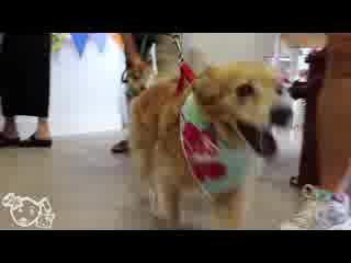 Χίλο, Χαβάη: Aloha Pawz, Hilo's Dog & Cat Boutique