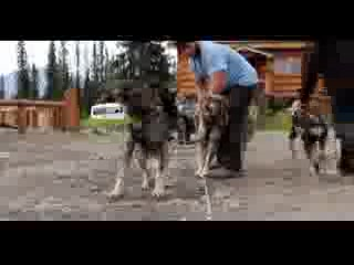 Cantwell, AK: DogGoneIt Commercial