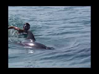 Wildlife Connection: Day of the Dolphins!