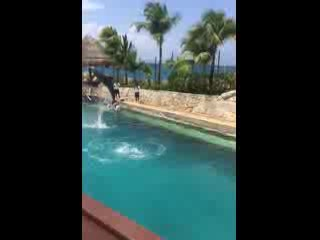 Cozumel, Mexiko: Dolphin in slow motion