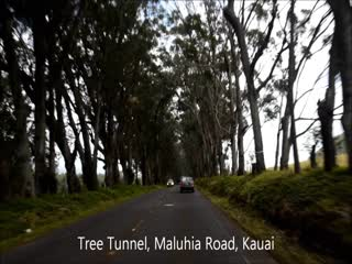 Kalaheo, HI: TREE TUNNEL KAUAI