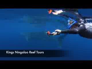Exmouth, Australia: Promo Kings Ningaloo Reef Tours