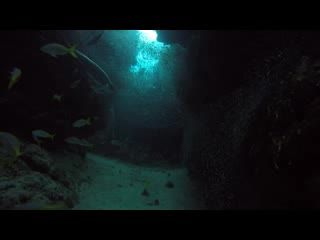 Long Caye, Belize: Silver Caves Special Dive