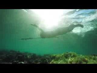 Wakatobi, إندونيسيا: Wakatobi -   Wonderful Indonesia: A Visual Journey through Wakatobi